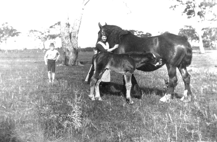 Horse scene039 low res (1)